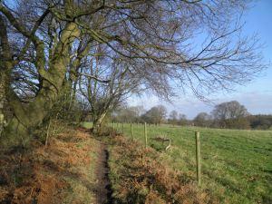 Near Hookwood