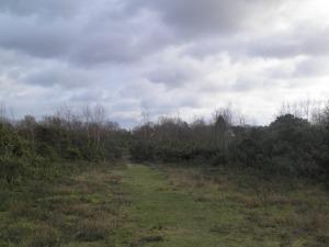 Brimpton Common