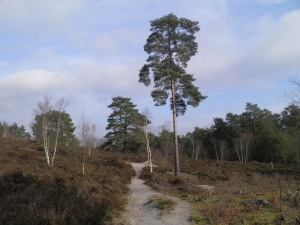Frensham Common