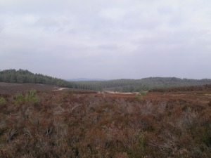 Hankley Common