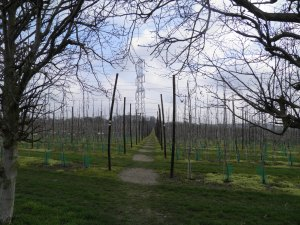 Through apple orchards