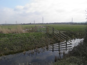 Shorne Marshes