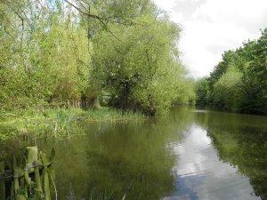 Broomhills lakes