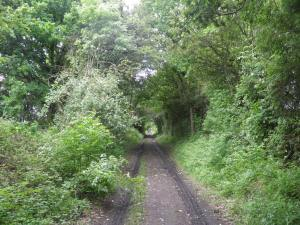 Along the disused railway line