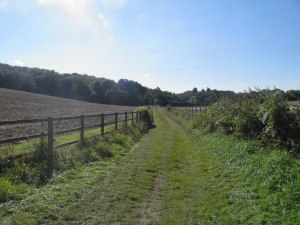 Bridleway to Blue Close Wood