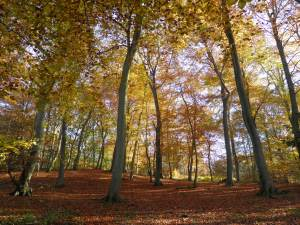 Pullingshill Wood