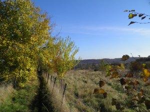 Path towards Marlow
