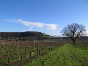 Denbies and Box Hill