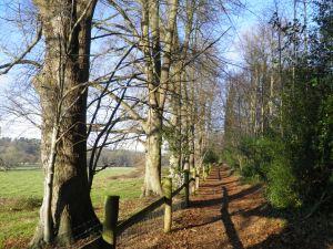 The path through Moor Park