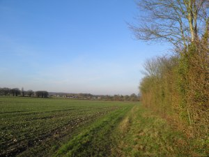 Across the fields to Flexford
