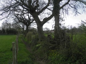 Field boundary, Three Oaks