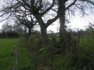 Field boundary, Three Oaks