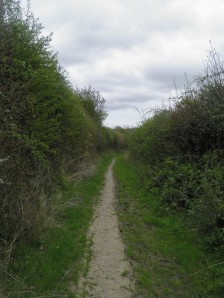 Path on Lidham Hill