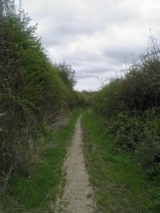 Path on Lidham Hill
