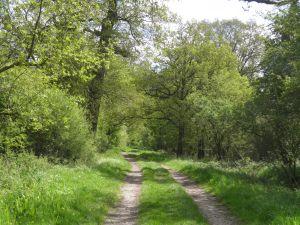 Through Sunninghill Park