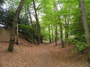 Callow Hill